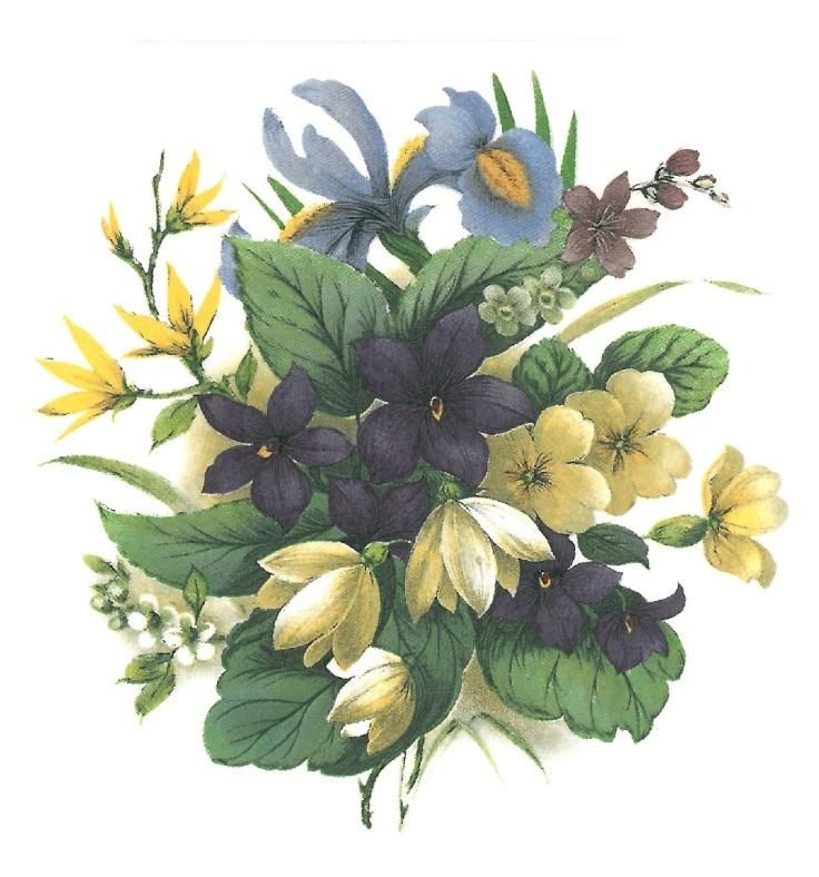 avril - violette