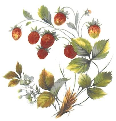 été - fraise