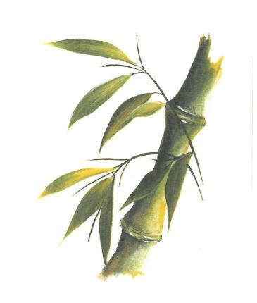 nature - bambou