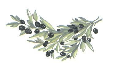 nature - olives 2