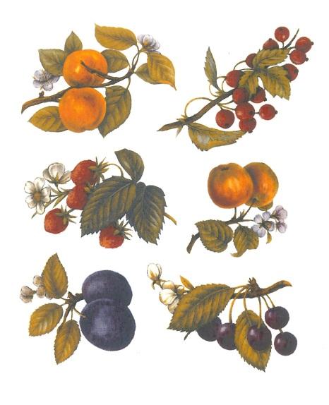 nature - tutti frutti