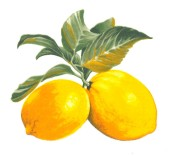 VERGER - citron