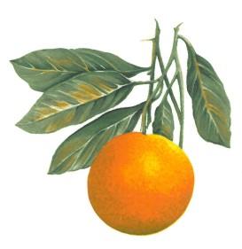 VERGER - orange